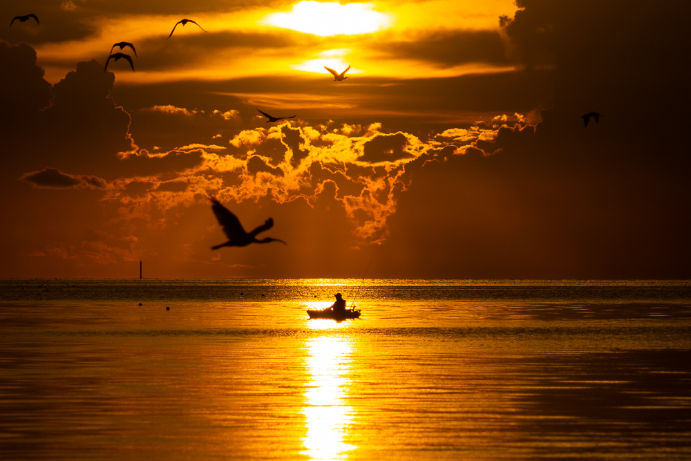 Bird soaring over ocean at sunrise